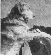 Crocus (Nous + Belle)  nata nel 1868