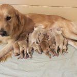 Sono nati i nuovi cuccioli di Nous e Tabatha