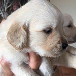 I cuccioli di Tabatha e  Nous crescono