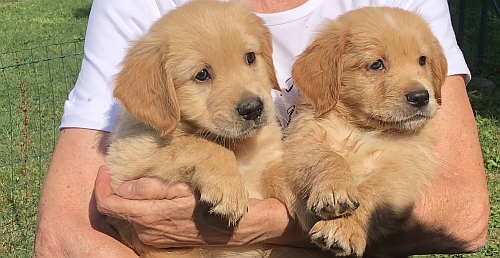 Nuove esperienze per i cuccioli